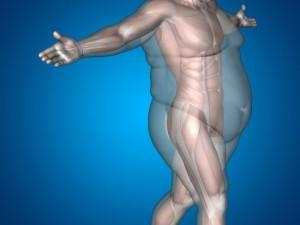 Muskler-under-underhudsfett-550x413